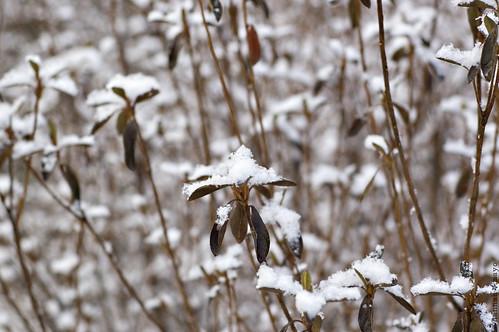 winter beauty, no.11