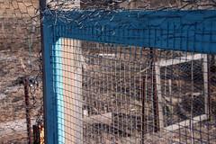 garden fence 054