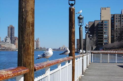 NYC_Roosevelt Island