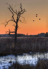Chincoteague Sunset (andertho) Tags: bird birds delete2 geese dc nps save3 delete3 save7 save8 delete save save2 goose save9 save4 va dcist save5 save10 save6 hdr assateague chincoteague nationalseashore savedbydeletemeuncensored save10again save8isinvalidnocomment