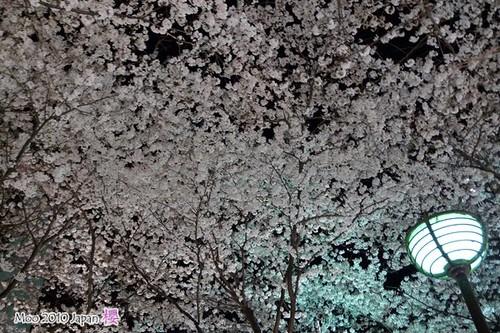 白川祇園-夜櫻3