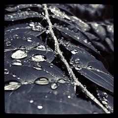 ฝนตกในเช้าวันอาทิตย์ #mobi