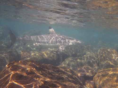Prudhoe Island   snorkel with the sharks....