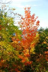 Autumn in FINGER LAKES New York (Jeny's flickr page) Tags: new york autumn finger lakes