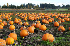 Pumpkin Patch 100_9296