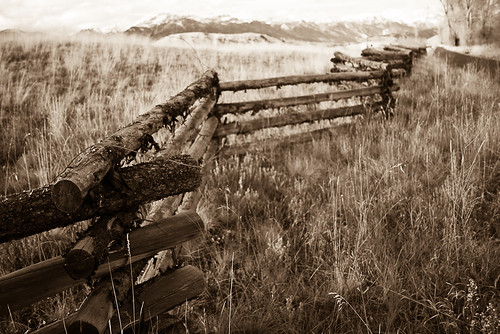 Fenced In
