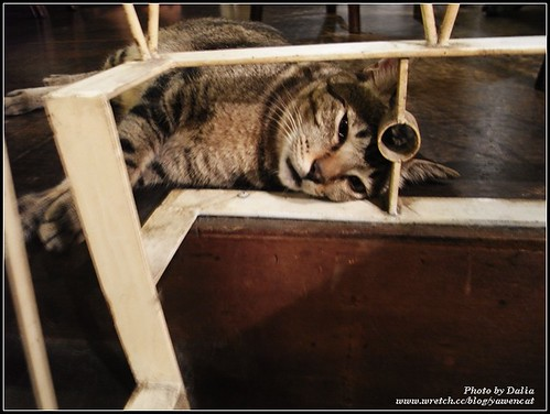 你拍攝的 Le Park Cafe|公園咖啡~慵懶店貓。