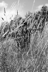 Hide and seek. Lion style. (China simpson) Tags: white black nature grass long snapshot lion hide rawr cooper seek hiding unexpected jak childlike chinasimpsonphotography