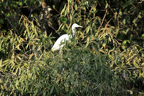 Low 2009-11-29 Sasan Gir - 01 Safari 13