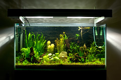 Tank #1 - Reborn (terencehonin) Tags: green water aquarium tank freshwater waterplant