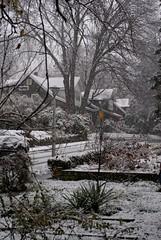 DSC02962 (rhombidec) Tags: snow baltimore snowfall sonydslra100 sal50f14
