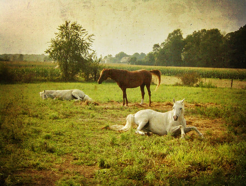 Horses 00