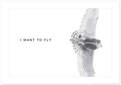 Fly (Imapix) Tags: canada bird art nature animal female canon photography fly flying photo foto photographie quebec qubec vol oiseau snowyowl imapix femelle voler harfangdesneiges gaetanbourque