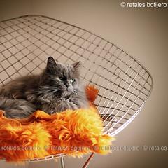 tirisiti (retales botijero) Tags: ikea canon 50mm kat chat gato katze gatto tirisiti bstis 450d gatete