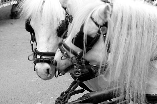 horses-in-love