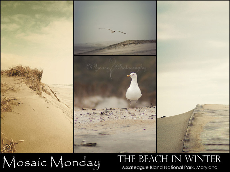 Mosaic Monday: The Beach in Winter
