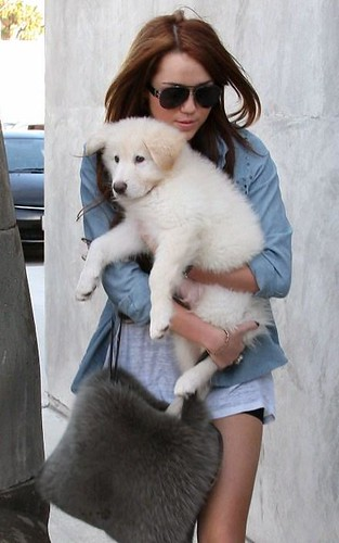 miley-cyrus-puppy-new (43