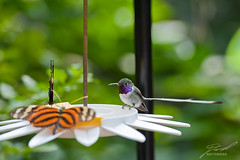 Hummingbird & Butterfly Snack Bar