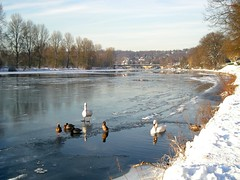 Frozen Ruhr I. (abudulla.saheem) Tags: schnee winter snow ice river germany nikon ducks swans nrw enten eis ruhr schwäne mülheim icycold flus riverruhr eisfläche coolpixl12 january2009 abudullasaheem icecoveringtheriver