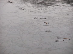 Fractured ice ( Lee J Haywood) Tags: ice wollatonpark frozenlake fractures
