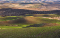 Palouse New Beginnings (Ryan McGinty) Tags: green landscape washington spring hills fields rolling palouse ryanmcginty