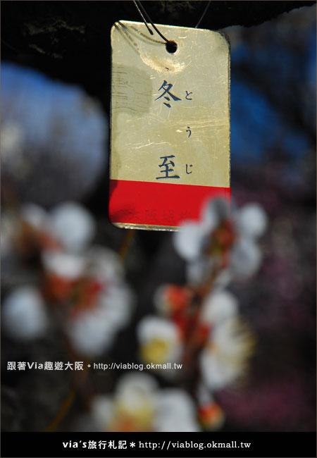 【via關西冬遊記】大阪城天守閣!冬季限定:梅園梅花盛開17