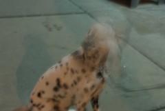 Dog Blur