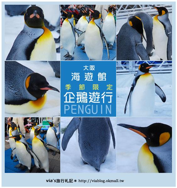 【via關西冬遊記】大阪海遊館~冬季限定!無敵可愛企鵝遊行來囉!