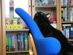 Rafa (Luca Nonato) Tags: black cat blackcat rafa gatto nero gattonero