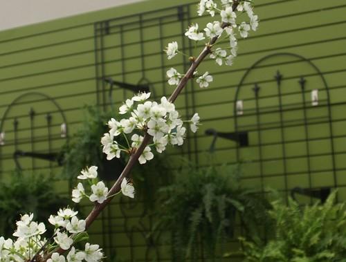 flowershop 036