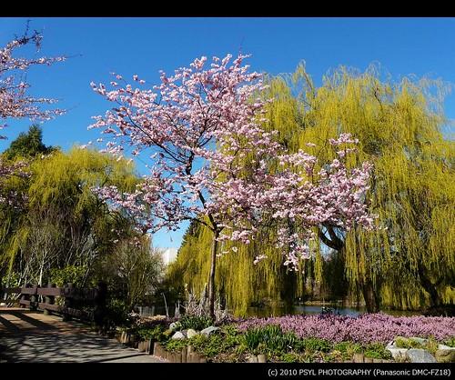 Minoru Lakes Park