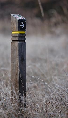 """#05: In der Teverener Heide sind Rundwanderwege durch diese Wegweiser ausgeschildert. Der gelbe Ring steht für den """"Großen Rundweg"""" (ca. 9,4 km)."""