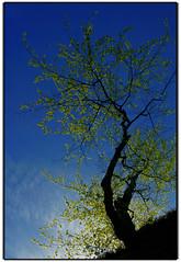 Supelegorgana (Gorbeia) (Jabi Artaraz) Tags: beautiful europa europe arboles sony bilbao zb silueta bizkaia euskalherria euskadi vizcaya bilbo gorbea gorbeia zuhaitzak beautifulearth euskoflickr fineartphotos abigfave superaplus aplusphoto flickrbest impressedbeauy diamondclassphotographer flickrdiamond amuriza allxpressus excapture jartaraz supelegor blinkagain bderechosdeautorauthorscopyrightb©jabiartaraz bestofblinkwinners blinksuperstars