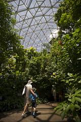 Climatron Interior