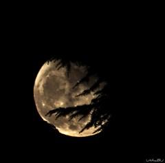 Luna 03/04/2010 (Luca Urdan [Utambu]) Tags: sky moon canon natura astro luna 500mm astronomia 2010 notturno 500d samyang nginationalgeographicbyitalianpeople
