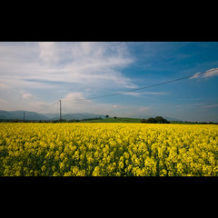 Yellow fields (christian&alicia) Tags: sky primavera nature yellow clouds spring nikon sigma natura catalonia fields catalunya oriental camps 10