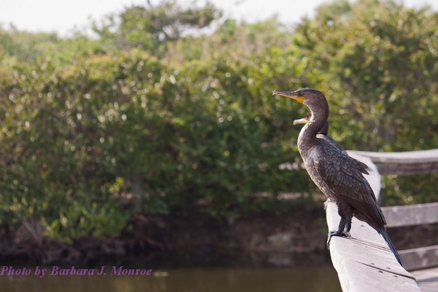 Everglades National Park (24 of 40)