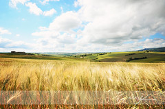 Cornfield (dhmig) Tags: italy nature landscape countryside cornfield nikon meadow marche sigma1020 cingoli themarches nikond7000 dhmig dhmigphotography