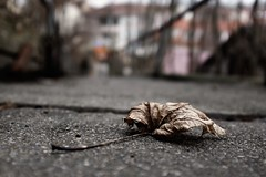 Withered (stefankamert) Tags: stefankamert withered fujifilm fuji x100 x100s dof colored blurry blur bokeh