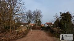 Hunde über dem Wiesbach