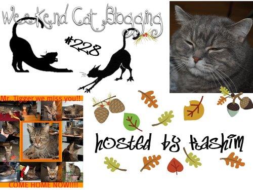 Weekend Cat Blogging #228