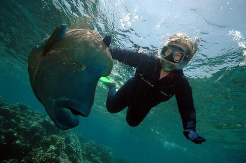 3 grandes lugares a explorar en Australia
