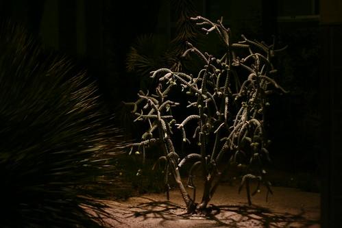freaky tree bush