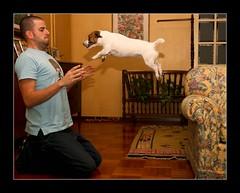 Il salto di Alice tra le braccia di Luca (nepalbaba) Tags: moving jump luca alice salto jackrussellterrier visualart platinumheartaward paololivornosfriend nepalbaba allegrisinasceosidiventa