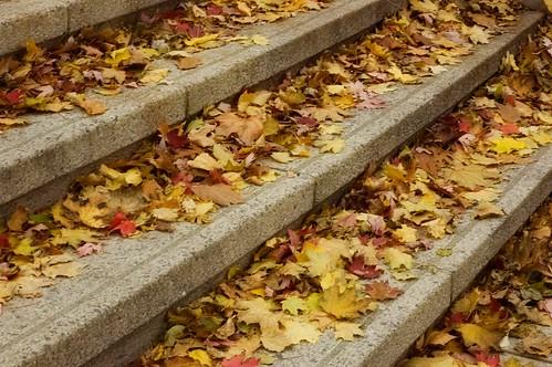 278:365 Leaves on the York Street Steps