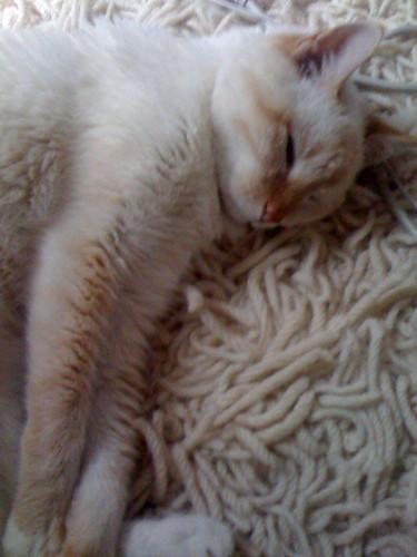 camo rug