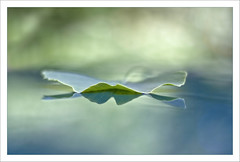 Lightness of being (Lightspectral) Tags: verde green water mirror leaf ginkgo bokeh greenlight grn ginkgobiloba thursday lichtmalerei ggt greenness haveagreatthursday viriditas bellsima paintingwiththecoloursoflight poetryoflightnet copyrightmariaschulzevorberg wwwpoetryoflightnet copyright2013 mariaismanahschulzevorberg koenigswintergermany