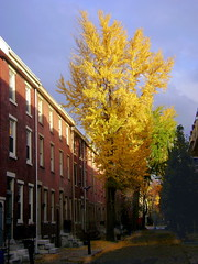 Philadelphia autumn gold (moocatmoocat) Tags: autumn trees philadelphia leaves yellow gold cityscape moo gingko washwest