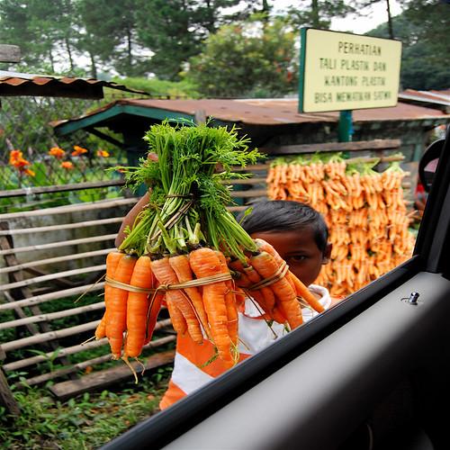 carrot peddler