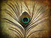 flickrversario _\I☀I/_ flickrversary (MayteVidri (busy / ocupada)) Tags: madrid españa canon spain feather textures flickrversary pluma texturas pavoreal ixus750 maytevidri flickrversario 20051228006
